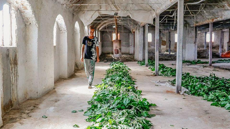 پرورش کرم ابریشم در سبزوار