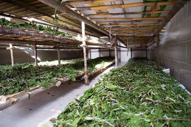 افزایش خوداتکایی منسوجات ابریشمی در کشور