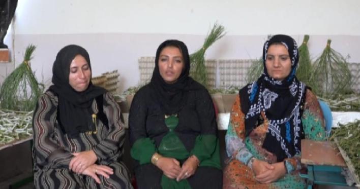 صنعت نوغانداری در کردستان احیا میشود